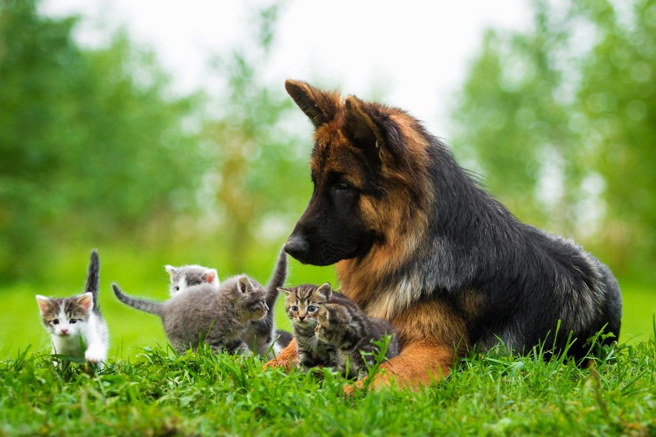 Puppy and Kitten Care Veterinarian and Animal Hospital in