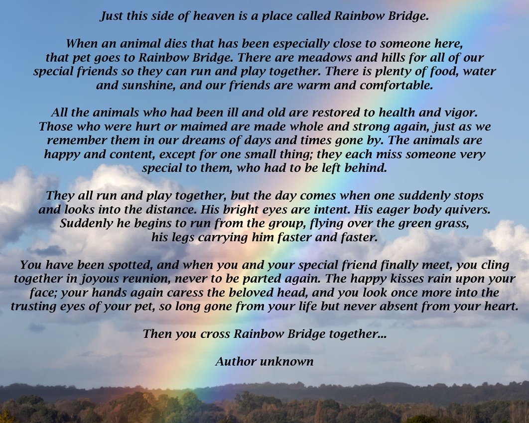 graphic regarding Rainbow Bridge Poem for Dogs Printable called Canine Close of Lifestyle Treatment in just Carlsbad, CA Veterinarian and